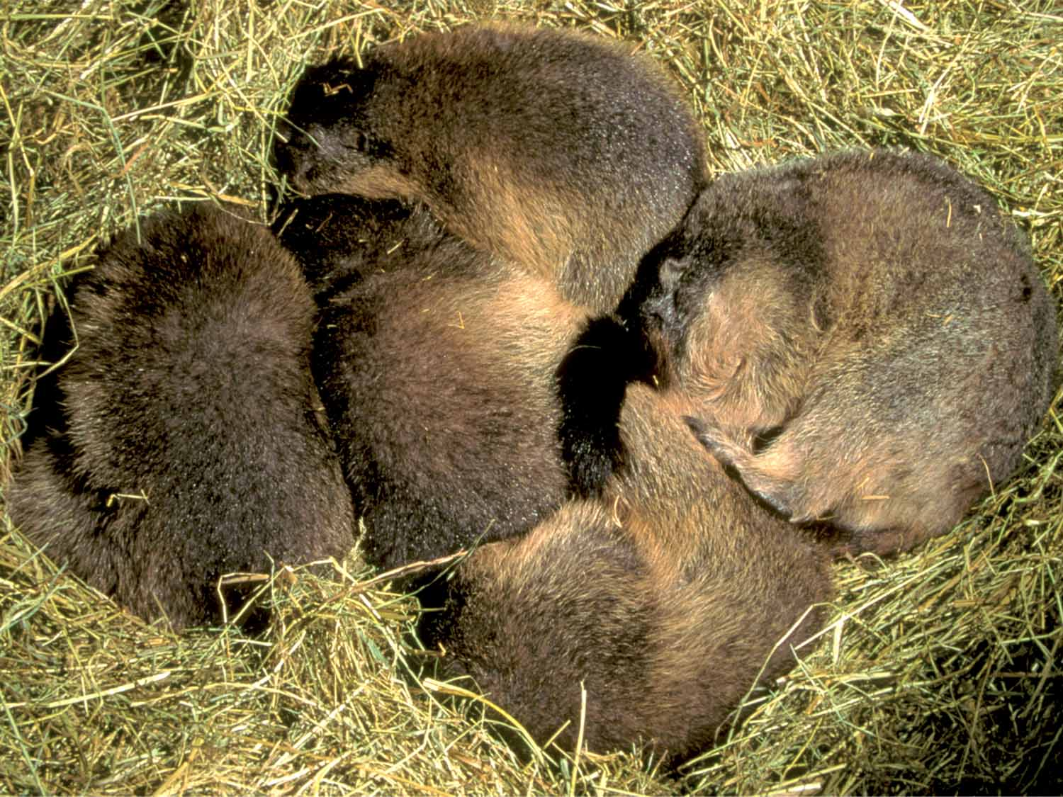 Animal Hibernation Pictures