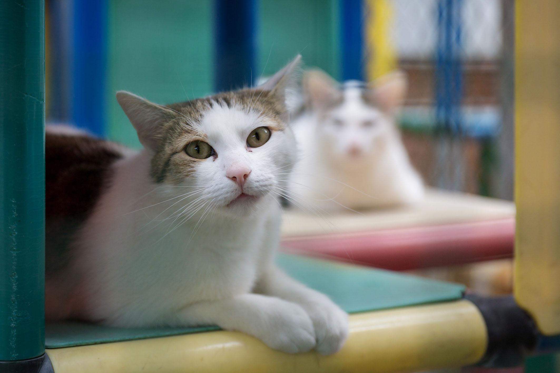 Vetmeduni Vienna Diarrhoea In Cats Intestinal Parasites Are Common Cause