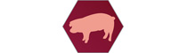Logo University Clinic for Swine | Department for Farm Animals and Veterinary Public Health